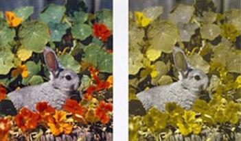 Welche Farben Sieht Ein Hund
